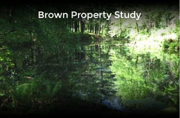 Brown Property Study